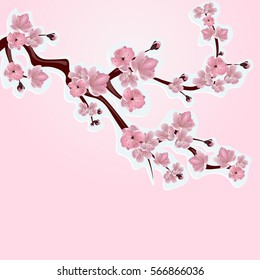 фотообои Japanese cherry, sakura. Lush branches pink cherry blossom close-up. Cut out of cardboard. Vector illustration