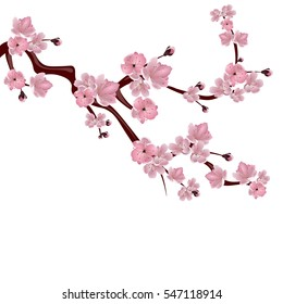 фотообои Japanese cherry tree. A branch of pink cherry blossom. Isolated on white background. Vector illustration