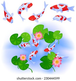 Japanese or Chinese themes. Carps Koi swim in clear pond with water rose lotus and leaves. Set of five fishes. Up view. Vector color cartoon.