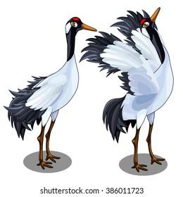 The Japanese crane. Vector illustration.