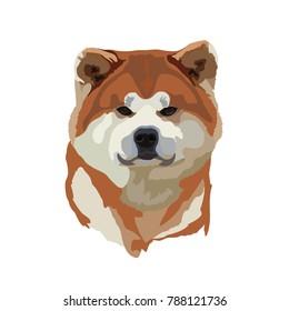 Japanese dog Akita Inu vector