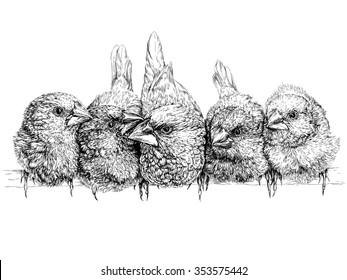 Japanese finch. Vector illustration  on white