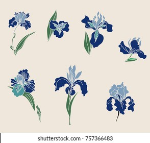 Japanese Iris flower set.hand drawn and painting iris flower.