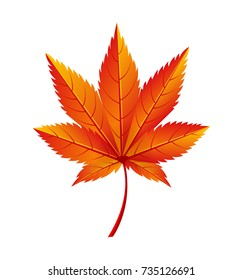 Japanese maple autumn golden yellow leaf icon isolated on white. Vector illustration with fallen orange maple in realistic design, botanical foliage element
