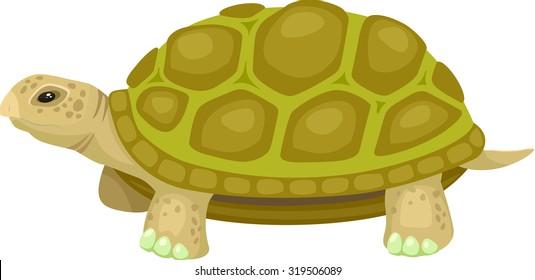Japanese Pond Turtle Vector Illustration