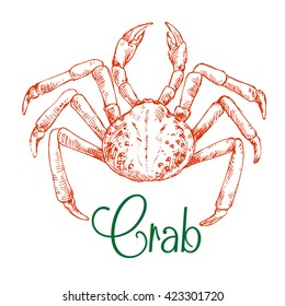 Japanese snow crab sketch symbol with rounded body and long thin legs. Use as seafood restaurant, underwater wildlife or oriental cuisine design