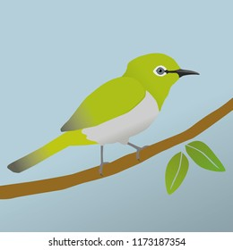 Japanese white eye bird