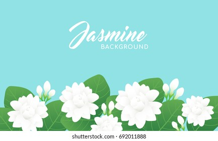 Jasmine flower background vector illustration. Jasmine is known as the symbol of Mother's Day in Thailand.