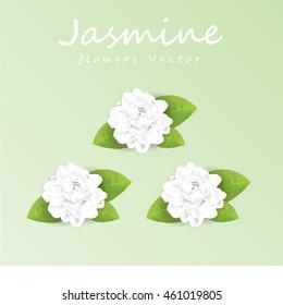 jasmine flower vector illustration