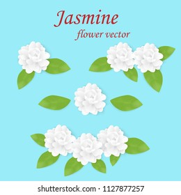 Jasmine flower vector.Fragrance flower.Jasmine is the symbol of Mother's Day in thailand.