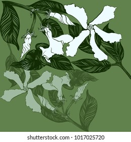 Jasmine - flowers, buds, leaves. Vector image. Wallpaper. Use printed materials, decoupage maps, posters, postcards, packaging.