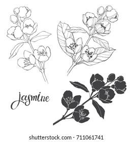 Fleurs Dessin Noir Et Blanc Images Stock Photos Vectors