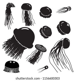Jellyfish icon set. Set of jellyfish illustrations. Vector.