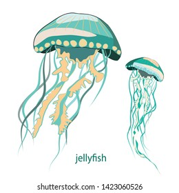 Jellyfish. Vector illustration of two jellyfish on white background