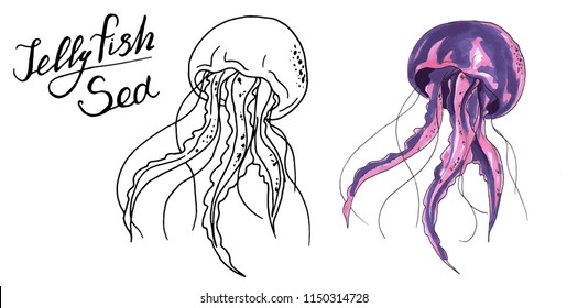 Jellyfish watercolor and black and white vector illustration. Medusa painting isolated on white background, colorful tattoo design. Jelly fish illustration. black and white jelly fish