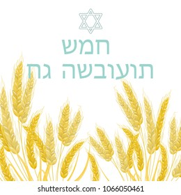 The Jewish holiday of Shavuot, the wheat ears. The text is written in Hebrew. Vector stock.