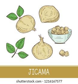 Jicama. Vegetable. Root, sheet, bowl. Sketch. Color. Set