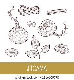 Jicama. Vegetable. Root, sheet, piece, cube. Sketch. Monophonic.