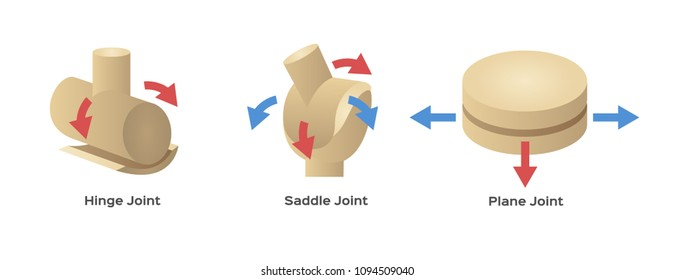 Gliding Joint Images, Stock Photos & Vectors | Shutterstock