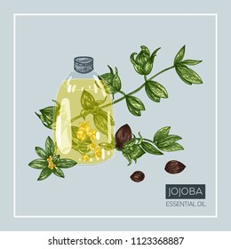 Jojoba essential oil. Bottle decorated with seeds, leaves and flowers. Vector hand drawn illustration.