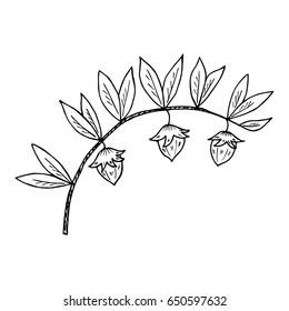 Jojoba nut, seed, fruit, branch, leaf, fruit, isolated on white. Organic oil nutrition healthy food. Image of medical plants. Hand drawn ink vintage retro illustration.