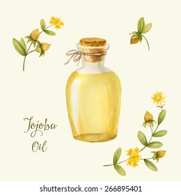 Jojoba oil, watercolor vector image, a medicinal plant.A healthy life.