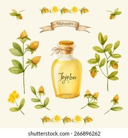 Jojoba oil, watercolor vector image, a medicinal plant.A healthy life.