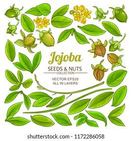 jojoba plant vector