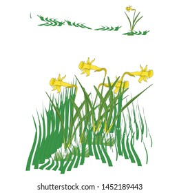 Jonquil flower isolated on white blackground.   plant vector icon