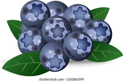 juicy Bluberries vector