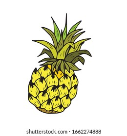 Juicy Pineapple. Hand-drawn . On a white isolated background. Vector illustration. Food and drink.