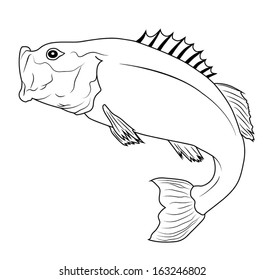 Jumping Bass Fish Outline Illustration