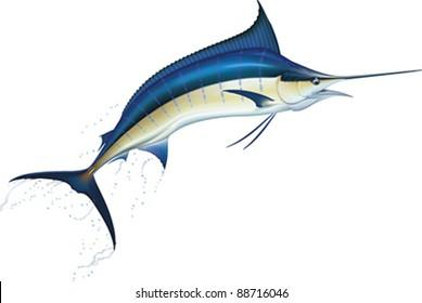Jumping blue marlin. Realistic vector illustration.