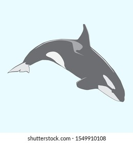 Jumping orca vector killer whale in grey colors