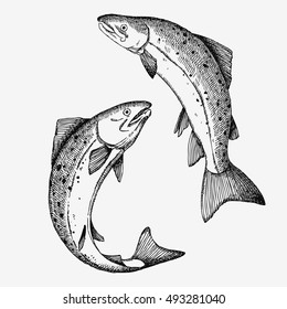 Jumping Salmon fish. Hand drawn illustration.