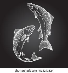 Jumping Salmon fish. Hand drawn illustration.