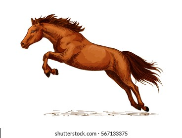 Jumping stallion horse, equine sport sketch. Racehorse mustang, purebred wild chestnut mare. Horsey or equestrian animal sport with jump over obstacles like oxer or cavaletti, sport club or show