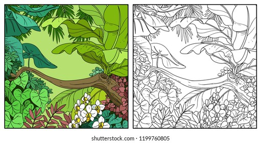 Jungle with with orchid flowers color and black contour line drawing for coloring on a white background
