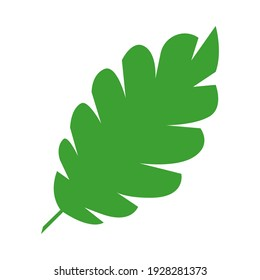 Jungle tropical green leaf, rainforest herbal element. Stock vector illustration isolated on white background. Can be used as an isolated sign, symbol or icon. Botanical plant flat vector illustration