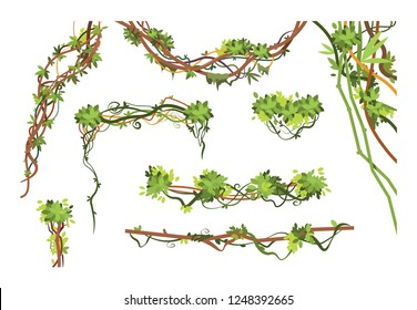 Jungle vine branches. Cartoon hanging liana plants. Jungle climbing green plant vector collection