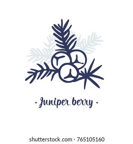 Juniper berry vector drawing. Isolated illustration of berry on branch. Juniper berry logo.