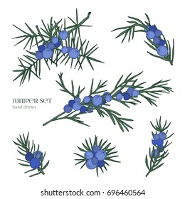 Juniper set. Detailed hand drawn branches with berries. Colorful hand drawn illustrations.