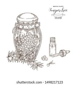 Juniper tree branch. Berries of Juniper in glass jar. Hand drawn medical plants. Vector illustration botanical. Engraving style.