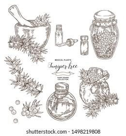 Juniper tree branch. Berries of Juniper with glass bottles and jars. Hand drawn medical plants. Vector illustration botanical. Engraving style.