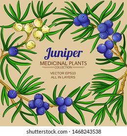 juniper vector frame on color background
