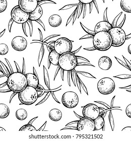 Juniper vector seamless pattern drawing. Isolated vintage  background with berry on, branch. Organic essential oil engraved style sketch. Beauty and spa, cosmetic ingredient, packaging design.