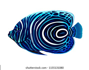 The juvenile emperor angelfish (Pomacanthus imperator). Vector illustration.