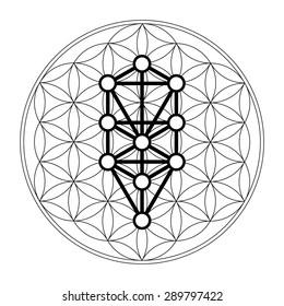 Kabbalah, 12 Sephiroth, tree of life, flower of life