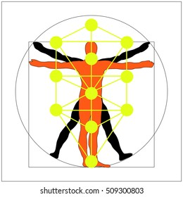 The Kabbalah Tree of Life and Leonardo da Vinci vitruvian man vector icon symbol design. Illustration isolated on white background.