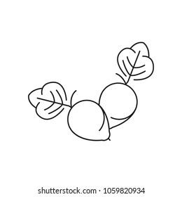 Kakadu icon. Outline kakadu vector icon for web design isolated on white background